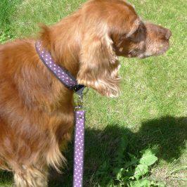 PRISSY laisse et collier pour chien