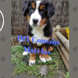 DIY Coussin Matelas pour chien